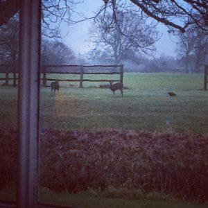 Ringshall grange deer