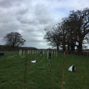 Ringshall grange tree planting